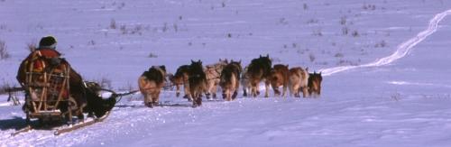 dogsled-kamchatka