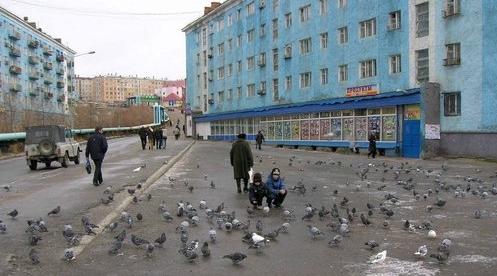 dudinka-birds