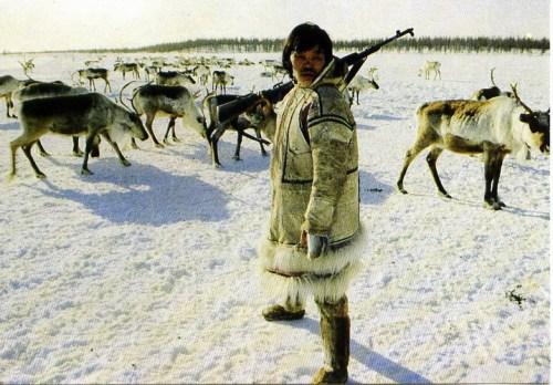 dudinka-reindeer