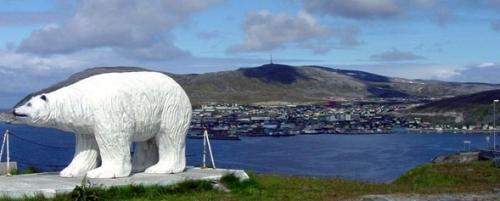 white-bear-Hammerfest