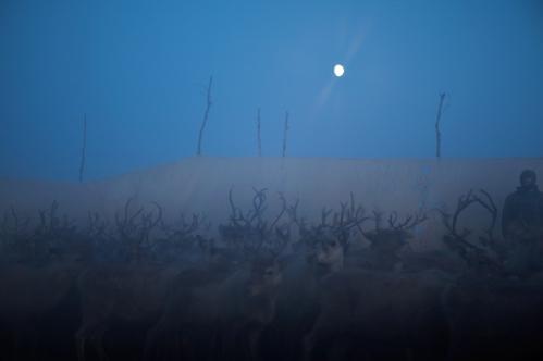 moonlit-gardi-corrals