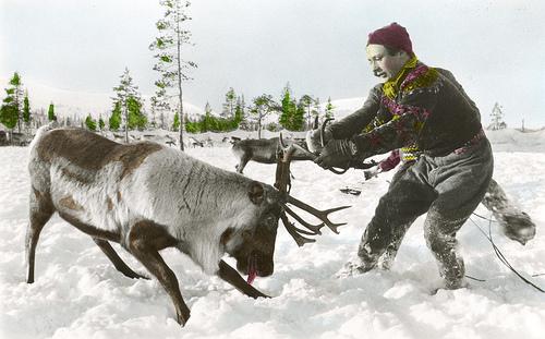 pull_reindeer