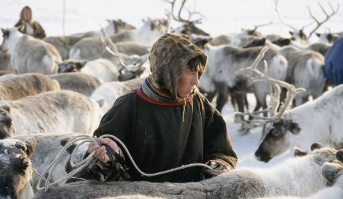 reindeer-herder-5