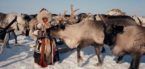 siberian-reindeer-names