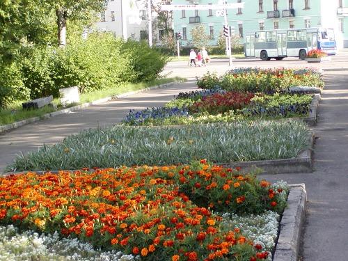 Zheleznogorsk-flowers